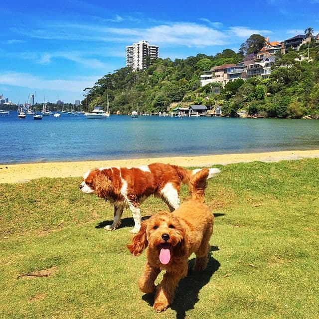 Sirius Cove - Dog Beach & Swimming Spot on Sydney Harbour